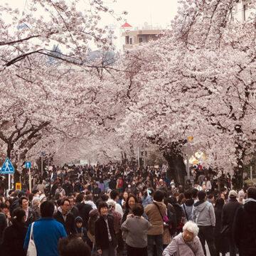 年に一度、田園都市線・宮崎台駅がめっちゃ人出あふれかえる日。桜まつり2019が大盛況でした。